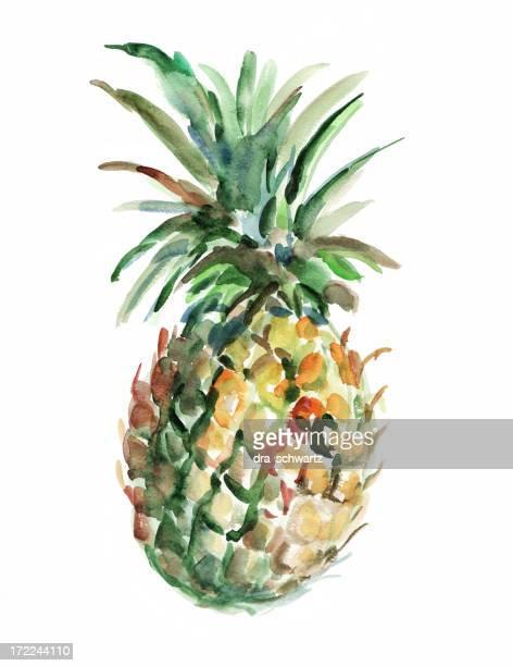 illustrations, cliparts, dessins animés et icônes de l'ananas - ananas