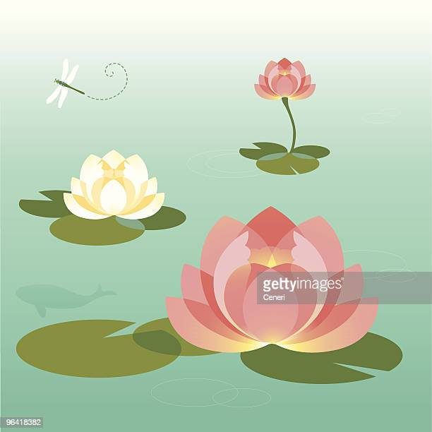 pink and white lotus pond in the summer - translucent stock illustrations