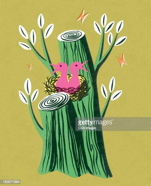 ilustrações de stock, clip art, desenhos animados e ícones de rosa pássaros em um verde cepo - canto de passarinho