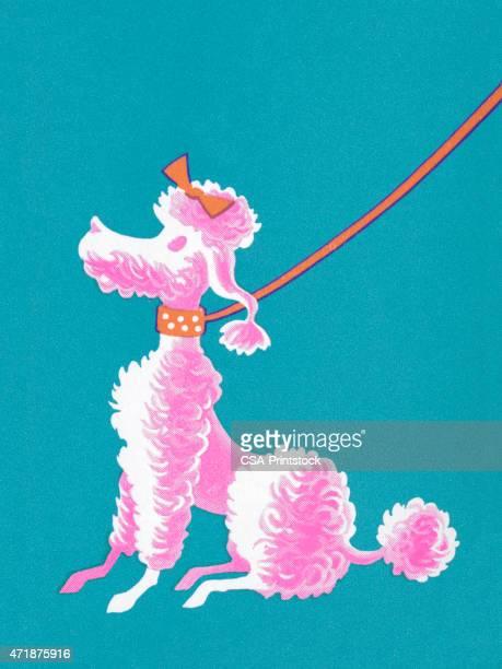 Pink Poodle Sitting