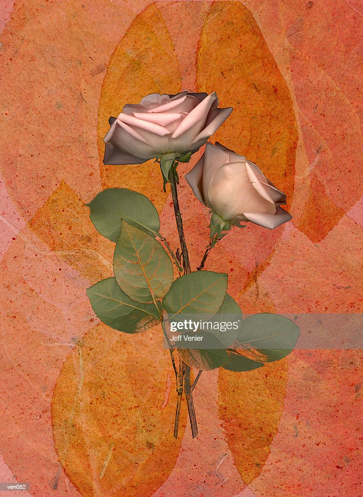 Pink Roses on Leaf Background : Stock Illustration