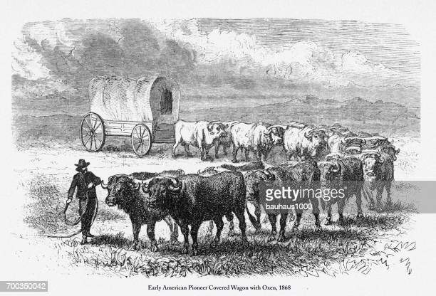 pioneer covered wagon with oxen, early american victorian engraving, 1868 - wild cattle stock illustrations, clip art, cartoons, & icons