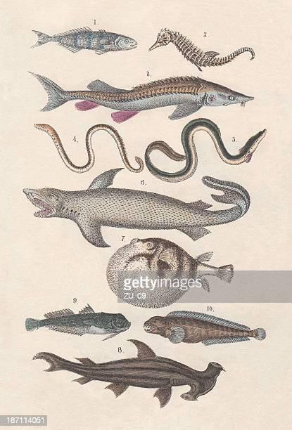 Pisces, hand-colored lithograph, published in 1880