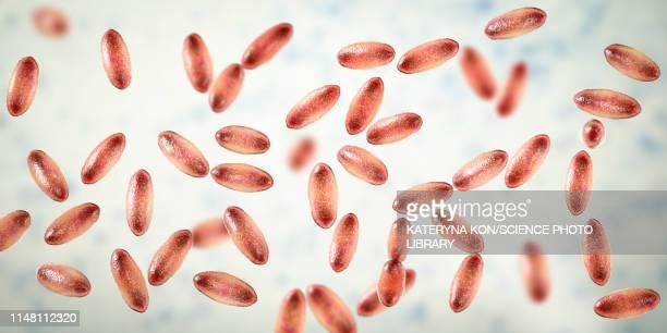 plague bacteria yersinia pestis, illustration - bubonic plague stock illustrations