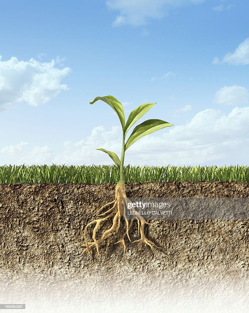 Plant, artwork : stock illustration
