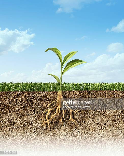 plant, artwork - root stock illustrations, clip art, cartoons, & icons