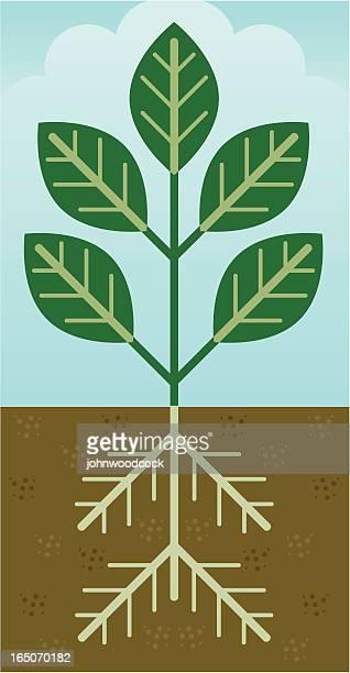 plant - ancestry stock illustrations, clip art, cartoons, & icons