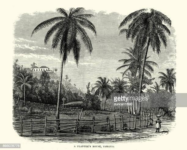 planter's house, jamaica, 19th century - jamaican culture stock illustrations, clip art, cartoons, & icons