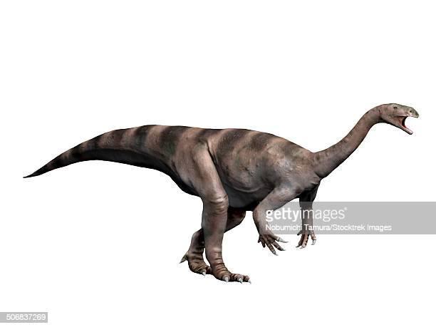 Plateosaurus dinosaur, white background.