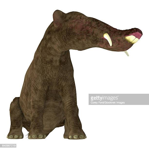 Platybelodon mammal on white background.