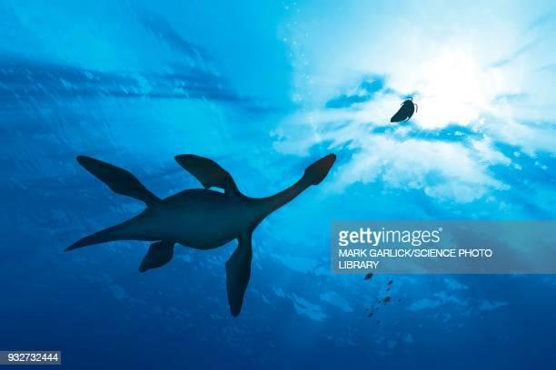 ilustraciones, imágenes clip art, dibujos animados e iconos de stock de plesiosaur marine reptile hunting, illustration - plesiosaurio