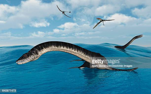 ilustraciones, imágenes clip art, dibujos animados e iconos de stock de plesiosaurs in their marine habitat. - plesiosaurio