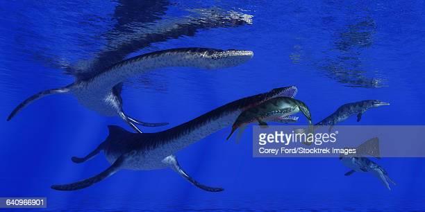ilustraciones, imágenes clip art, dibujos animados e iconos de stock de plesiosaurus attacks a metriorhynchus in jurassic seas. - plesiosaurio
