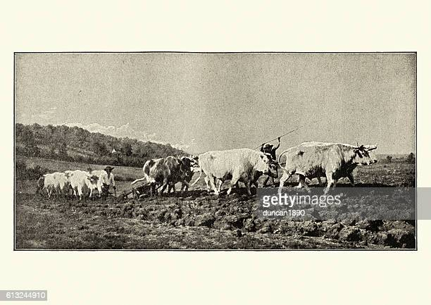 ploughing in the nivernais - wild cattle stock illustrations, clip art, cartoons, & icons