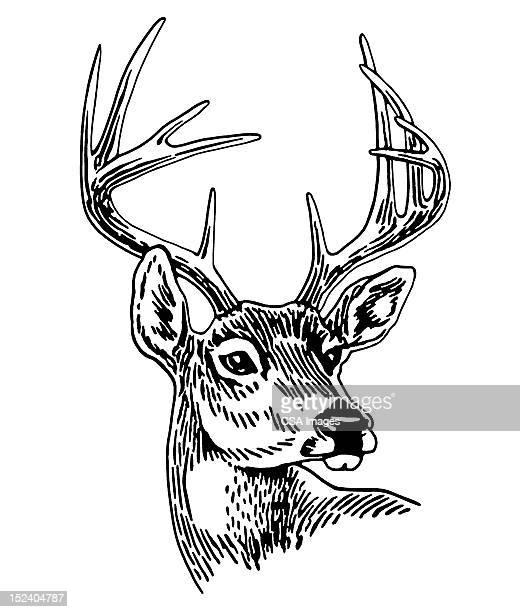10 Point Buck