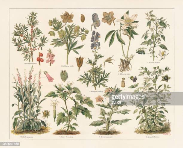 Poisonous plants, lithograph, published in 1897