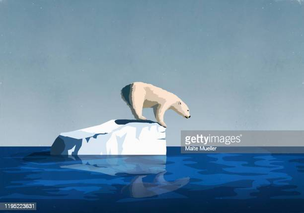 illustrations, cliparts, dessins animés et icônes de polar bear fishing from on top of iceberg - ours polaire