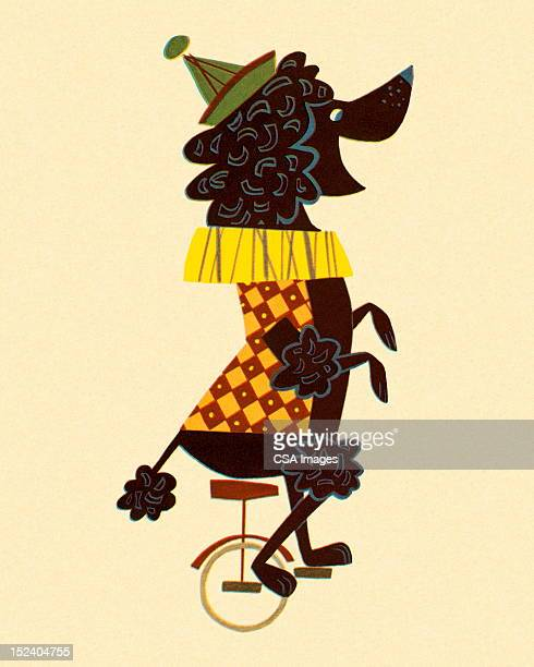 poodle on a unicycle - unicycle stock illustrations, clip art, cartoons, & icons