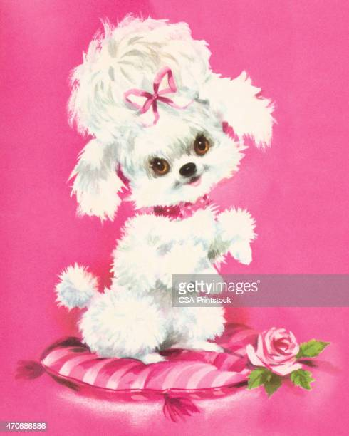 Poodle Sitting on a Pillow
