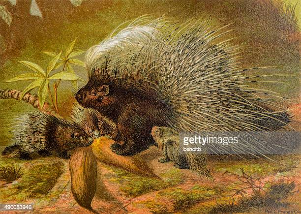 porcupines - group of animals stock illustrations, clip art, cartoons, & icons