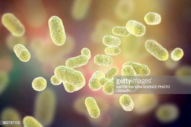 porphyromonas gingivalis oral bacterium, illustration - microbiology stock illustrations
