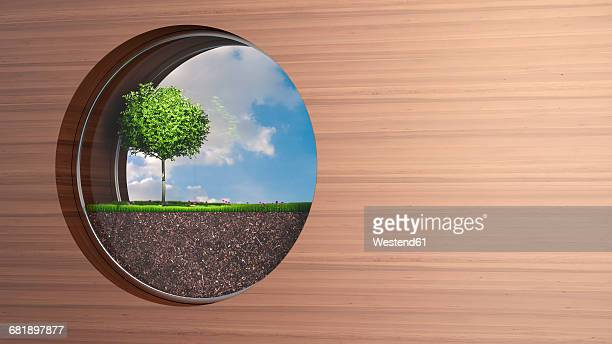 Porthole in wooden wall with tree growing on grass