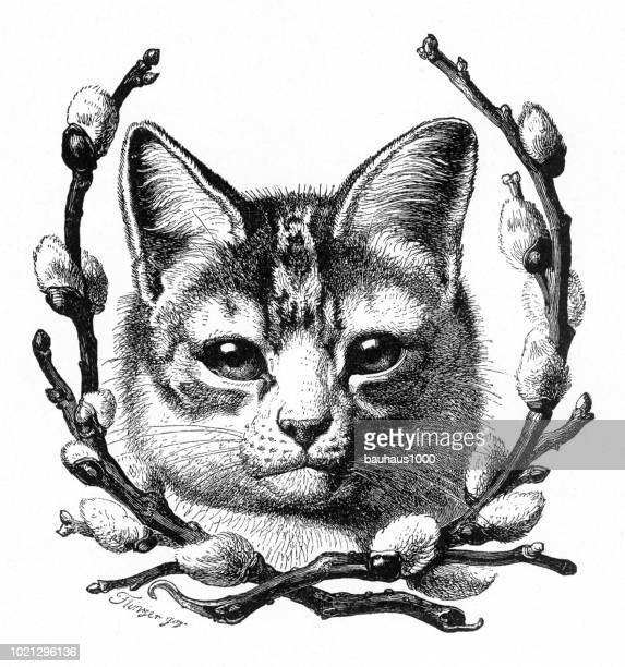 portrait of a cat framed by pussywillows, american victorian engraving, 1882 - young animal stock illustrations, clip art, cartoons, & icons