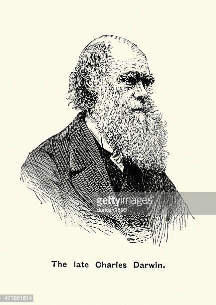 porträt von charles darwin - darwin stock-grafiken, -clipart, -cartoons und -symbole