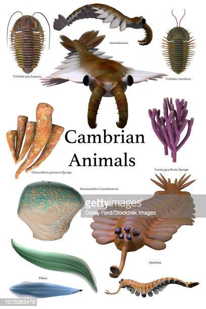 Poster of prehistoric animals during the Cambrian period.