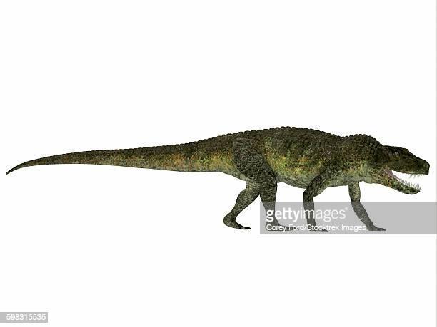 Postosuchus reptile from the Triassic Period.