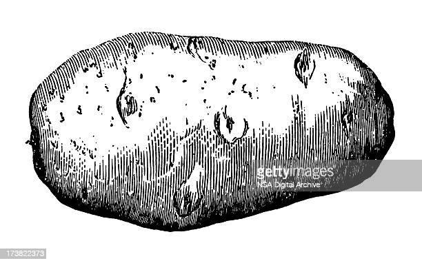 ilustraciones, imágenes clip art, dibujos animados e iconos de stock de patata - patatas preparadas