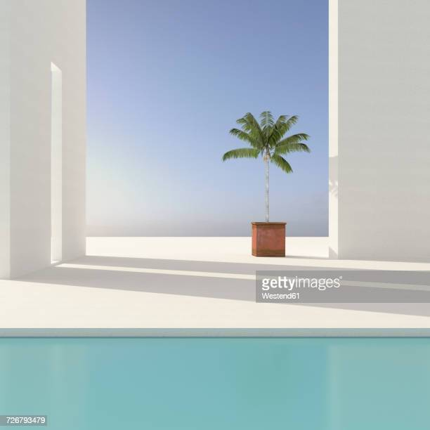potted palm tree on terrace, 3d rendering - simplicity stock illustrations