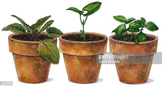 potted plants - plant stage stock illustrations, clip art, cartoons, & icons