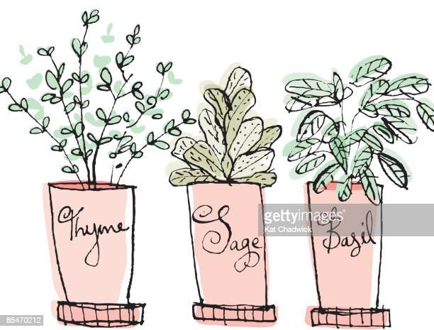 potted thyme, sage and basil herbs - basil stock illustrations, clip art, cartoons, & icons