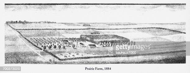 prairie farm, early american engraving, 1884 - prairie stock illustrations, clip art, cartoons, & icons