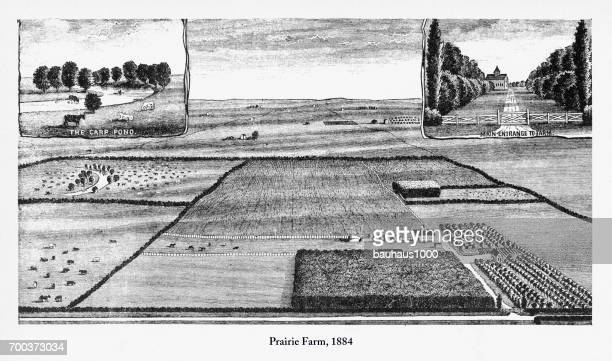 prairie farm, early american engraving, 1884 - paddock stock illustrations, clip art, cartoons, & icons
