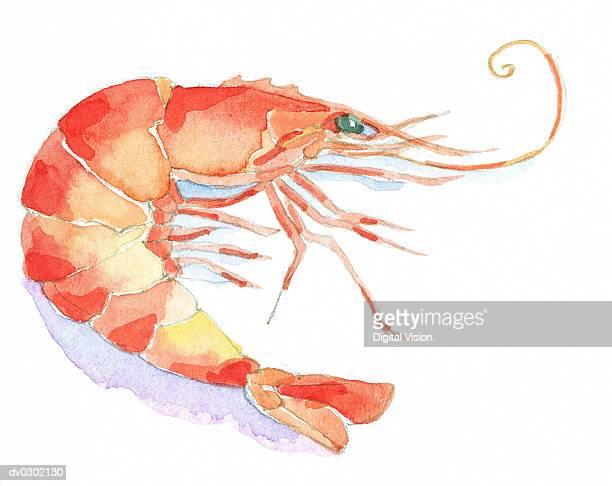 ilustrações, clipart, desenhos animados e ícones de prawn - camarões