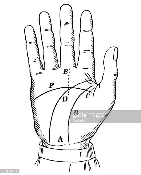 Prediction of Hand