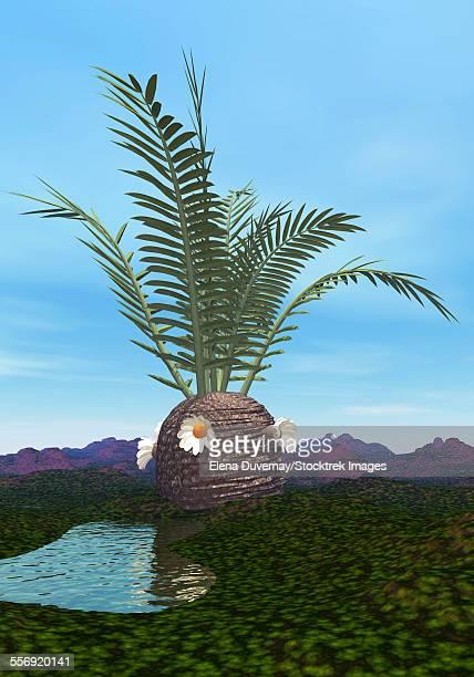 Prehistoric era Cycadeoidea tree.