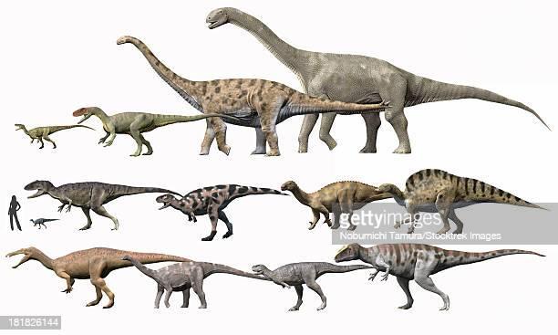 ilustraciones, imágenes clip art, dibujos animados e iconos de stock de prehistoric era dinosaurs of niger drawn to scale. - paleobiología