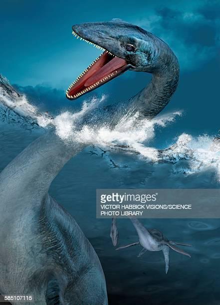 ilustraciones, imágenes clip art, dibujos animados e iconos de stock de prehistoric sea creatures, illustration - plesiosaurio