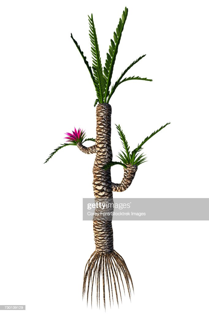 A prehistoric Williamsonia plant from the Mesozoic Era. : Ilustración de stock