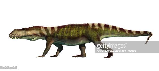 ilustraciones, imágenes clip art, dibujos animados e iconos de stock de prestosuchus archosaur from the middle triassic. - triásico