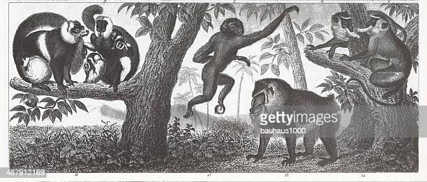 primates engraving - mandrill stock illustrations, clip art, cartoons, & icons