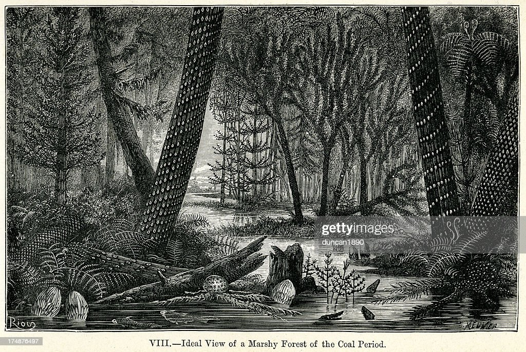 Primeval Forest : stock illustration