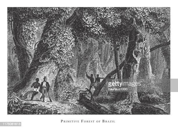 primitive forest of brazil, forests, lakes, caves and unusual rock formation engraving antique illustration, published 1851 - basalt stock illustrations, clip art, cartoons, & icons