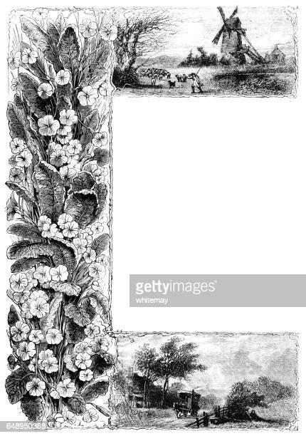 Primrose border - vintage engraving