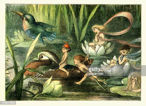 princess nobody - fairy and nymphs - fairy stock illustrations