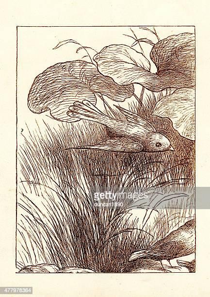 princess nobody - the bird - mockingbird stock illustrations, clip art, cartoons, & icons