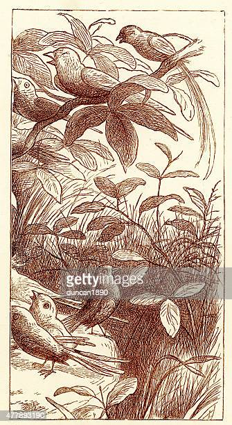 princess nobody - the birds - mockingbird stock illustrations, clip art, cartoons, & icons